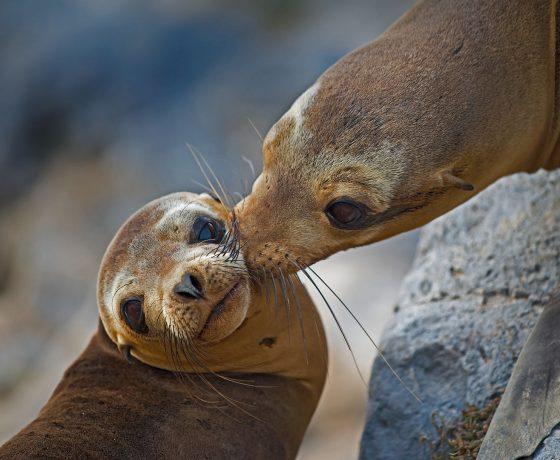 Galapagos Croisière sea lion