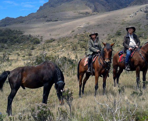 vacances, voyages, escalade, équitation